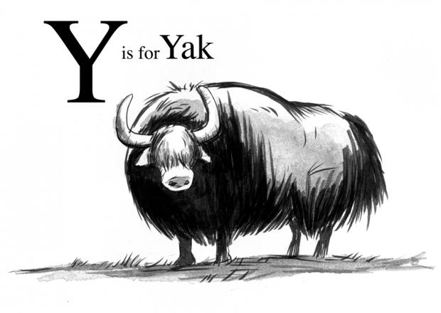 y-yak-620x440.png